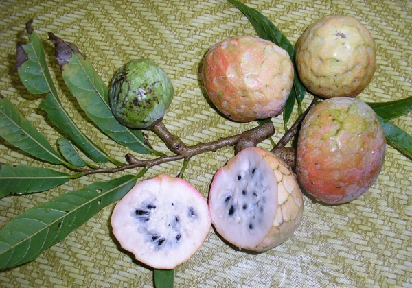cherimoya fruits rougis