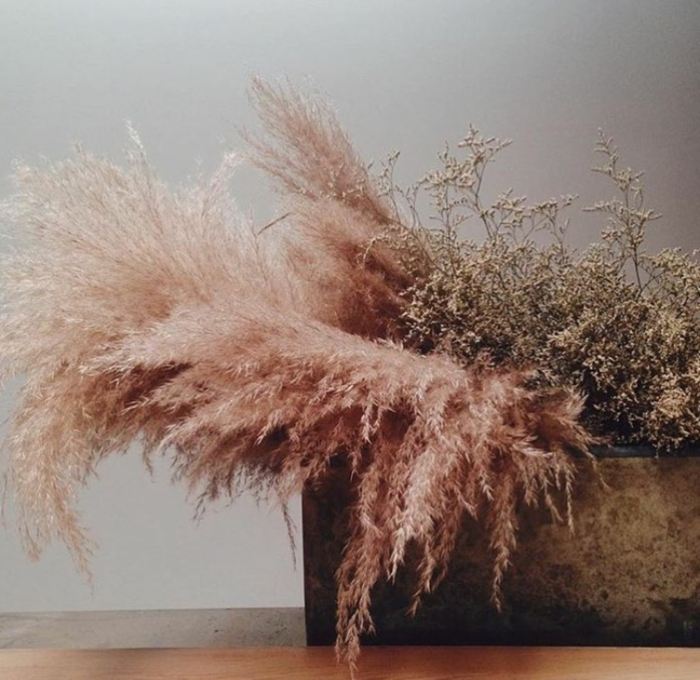 déco maison herbe de la pampa