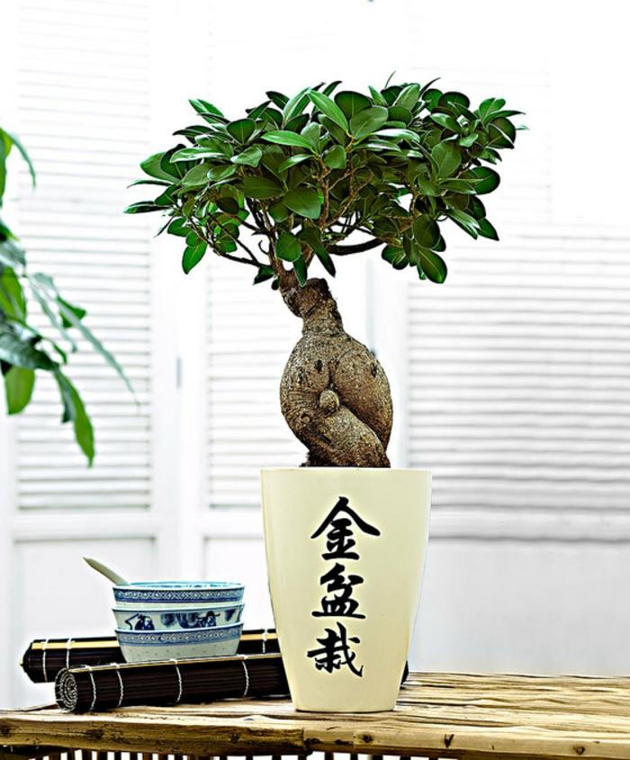 ficus ginseng pour un intérieur zen