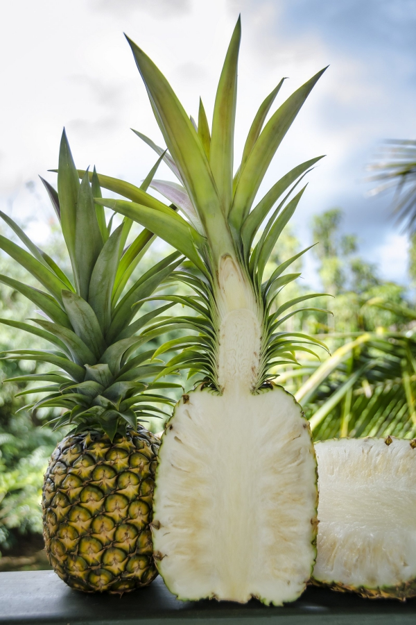 plante ananas séparée en deux