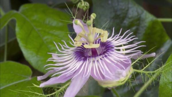 plante arum jeu de la nature