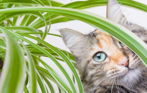 plante chat caché derrière les feuilles