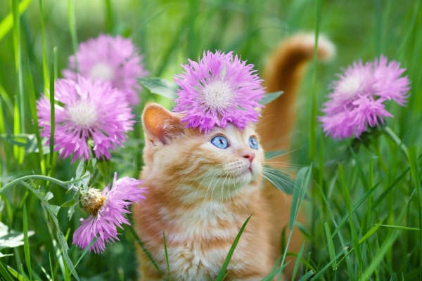 plante chat certaines plantes toxiques