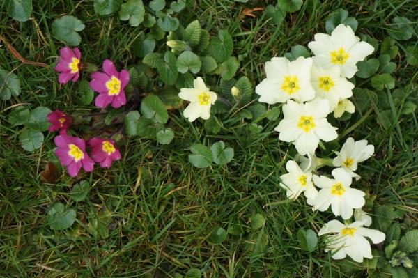 plante chat fleurs répulsives
