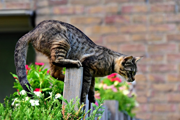 plante chat pas de barrière