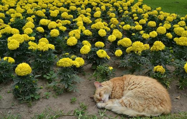 plante chat promotion de plantes répulsives