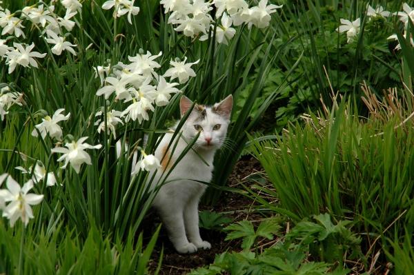plante chat tenir l'animal à distance