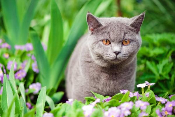 plante chat un matou gris