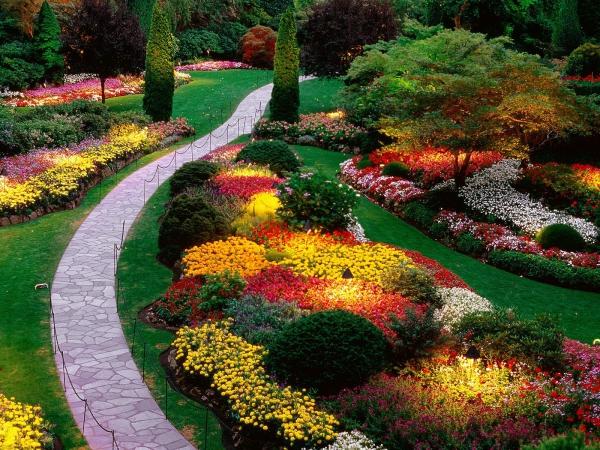 plante chat un paradis multicolore