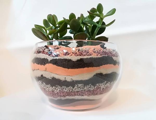 plante crassula joli terrarium
