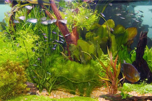 plante d'aquarium éclairage approprié