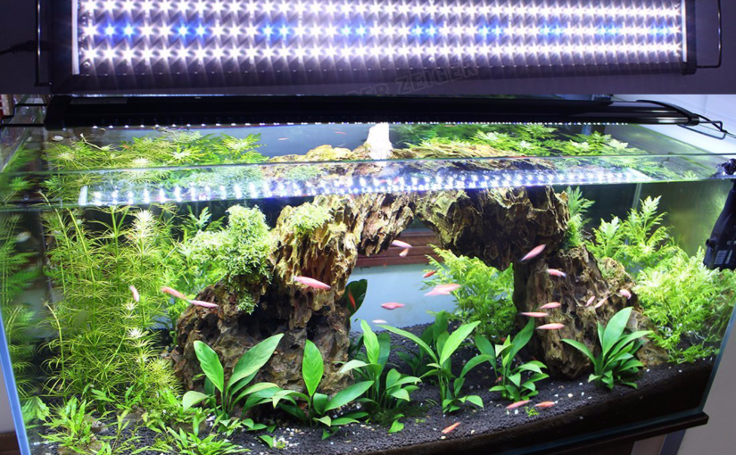 plante d'aquarium LED éclairage