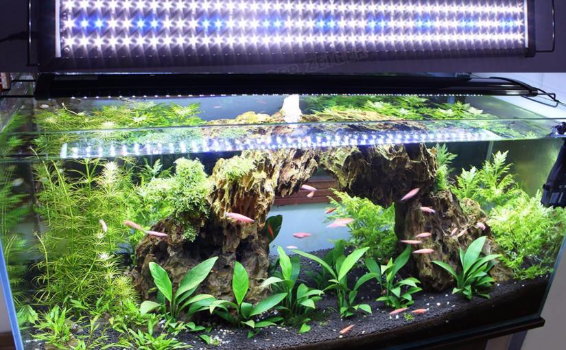 plante d'aquarium LED éclairage