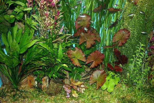 plante d'aquarium comme une forêt