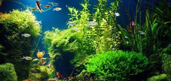 plante d'aquarium joli fond d'écran