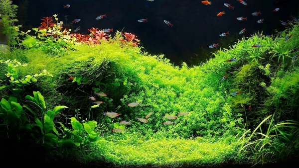 plante d'aquarium mise en place