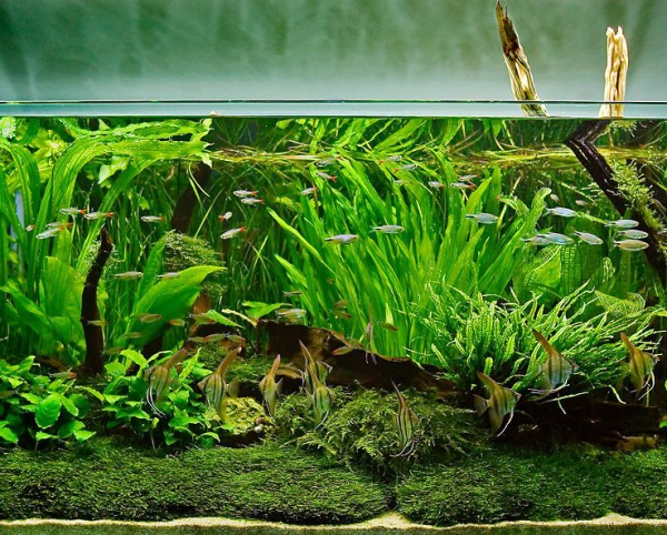 plante d'aquarium un milieu naturel