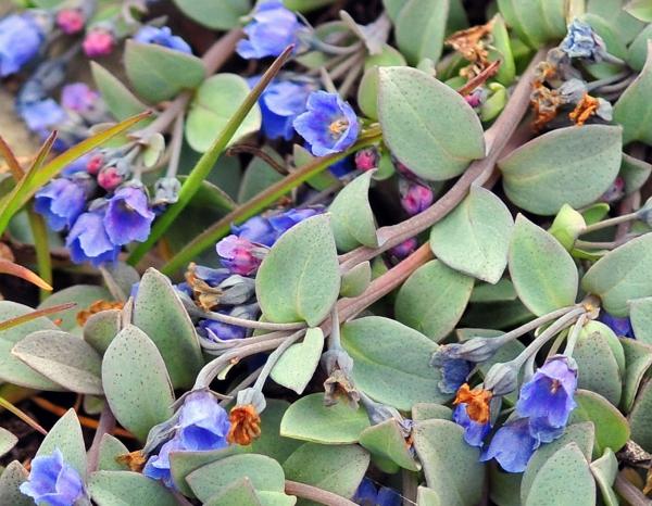 plante huître fleurs fanées