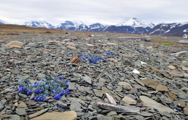 plante huître paysage rigide