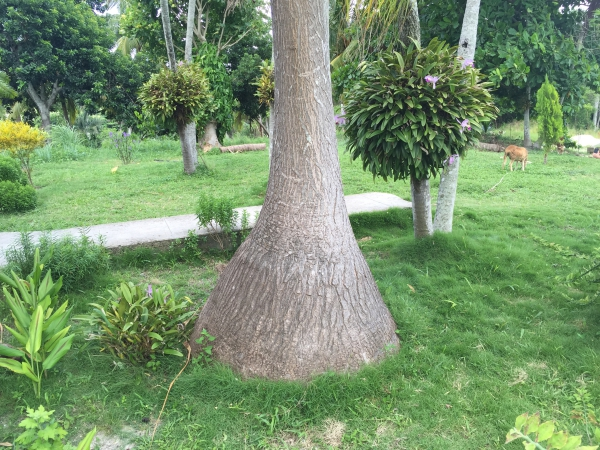 plante pied d' éléphant un milieu naturel