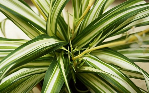 plante symbole de l'amour en développement
