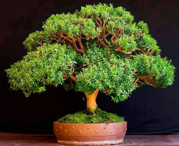 plante symbole de l'amour petit arbre