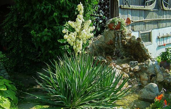 plante yucca coin du jardin bien arrangé