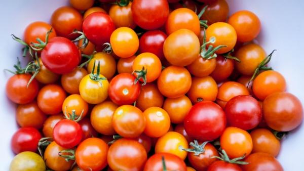 planter des tomates cerises bicolores
