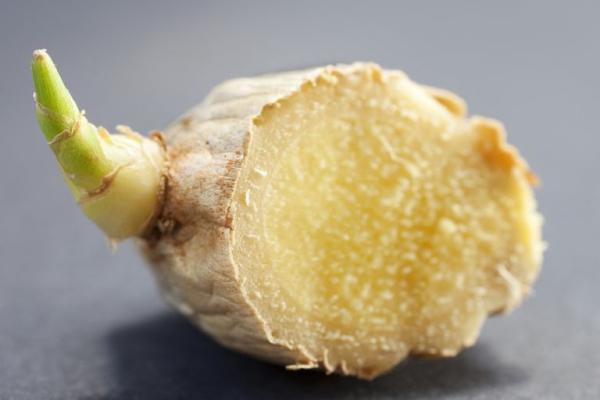 planter du gingembre commence à germer