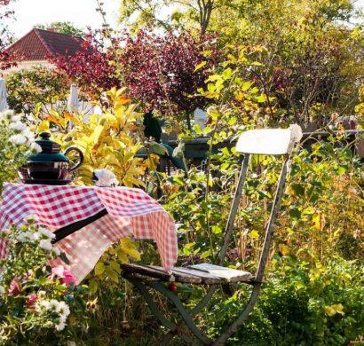 Planter un olivier pour créer un esprit méditerranéen dans le jardin