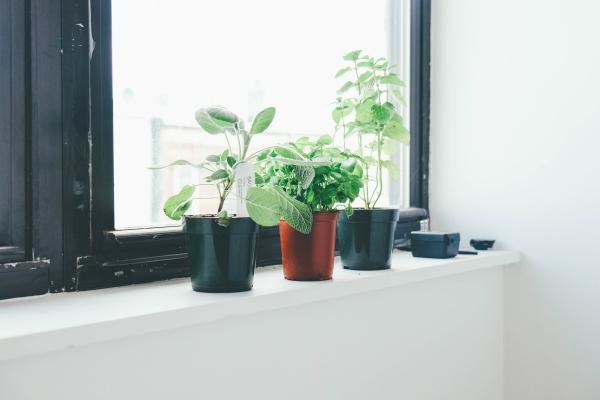 bien-être à la maison manque de plantes