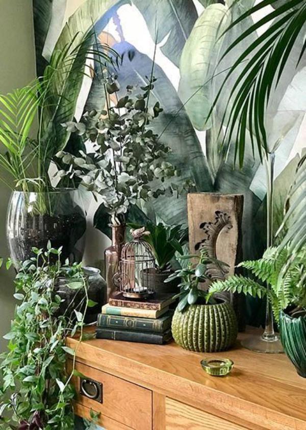 bien-être à la maison plantes vertes
