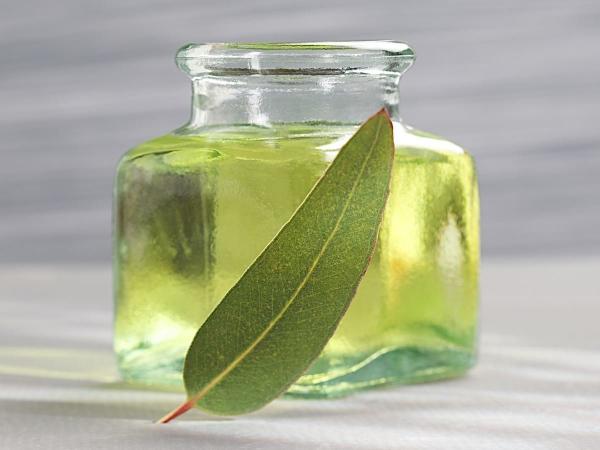 comment utiliser les huiles essentielles une feuille d'eucalyptus