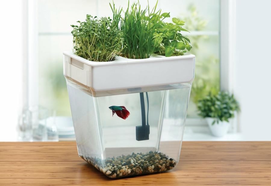 cultiver des herbes toute l'année système aquaponique
