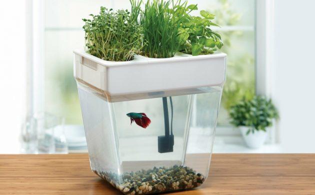 système aquaponique