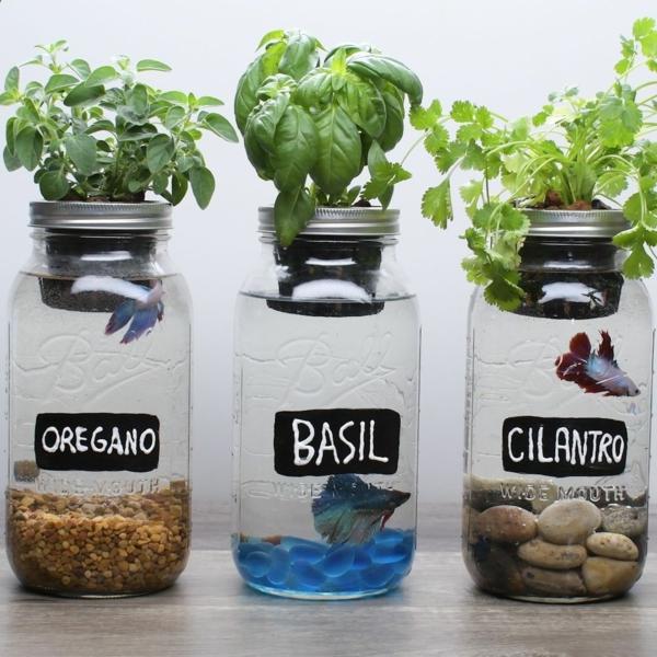 cultiver des plantes toute l'année système aquaponique