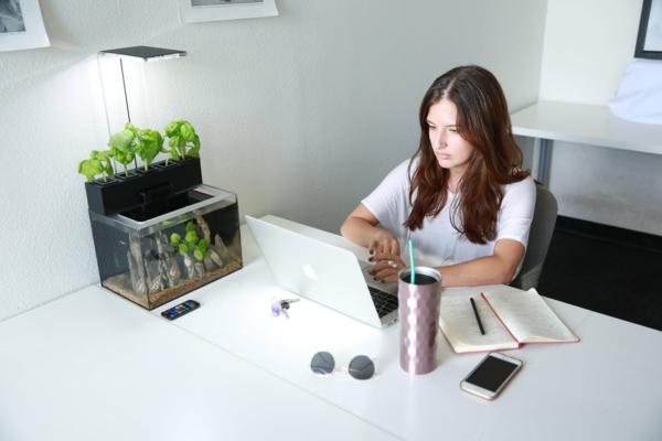 diy jardin méthode aquaponie système aquaponique