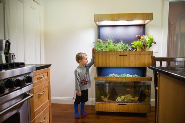 jardinage écologique système aquaponique