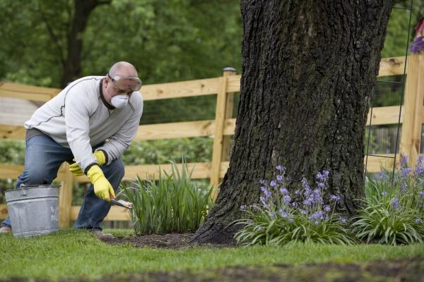jardinage conseils fertiliser d'un engrais