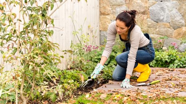 jardinage conseils nettoyer le sol