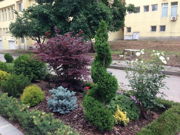 jardinage conseils plante de rocaille