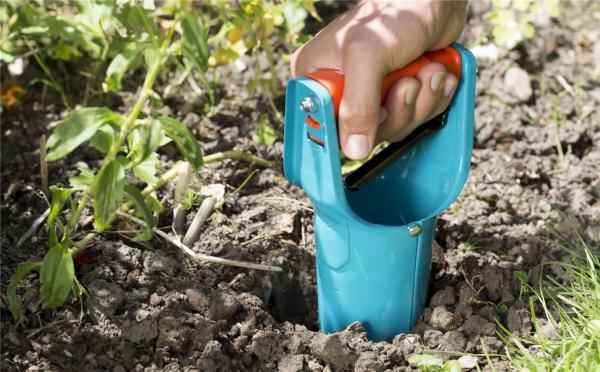jardinage conseils planter des bulbes