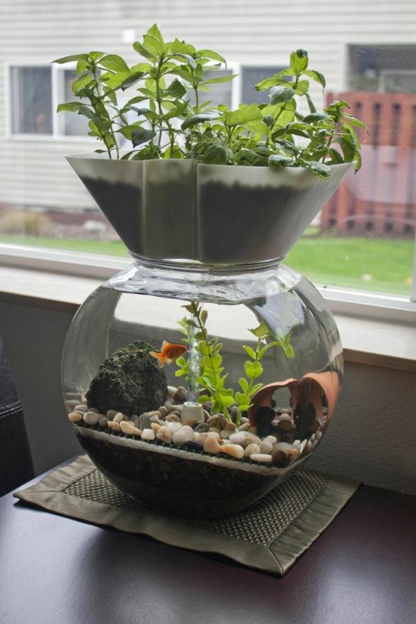 jardinage durable maison système aquaponique