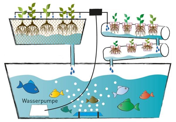 jardinage système aquaponique schéma