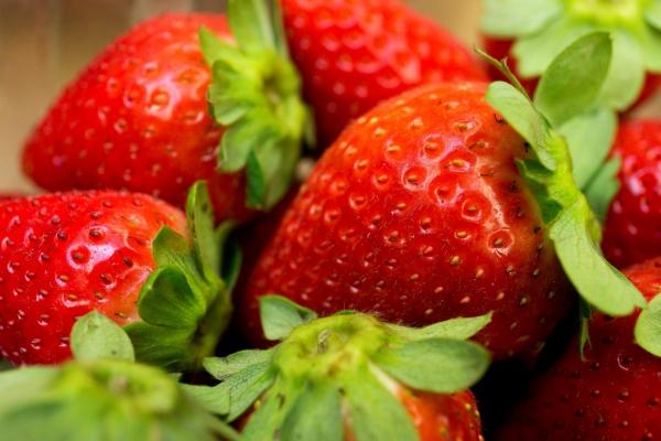 planter des fraises fruits savoureux