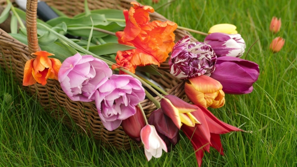 planter des tulipes joli bouquet du jardin