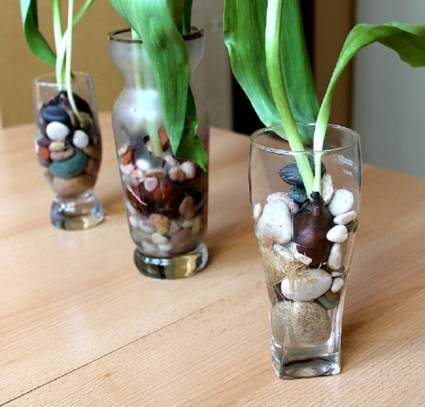 planter des tulipes terrariums aux tulipes