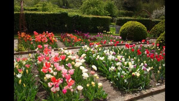 planter des tulipes un joli parc