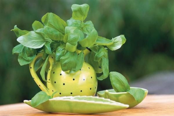 planter du basilic pour l'arôme