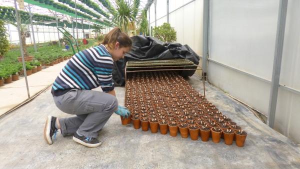 planter du muguet dans une pépinière